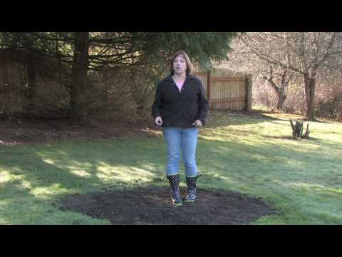 gardening-tips-&-tricks-:-how-to-fix-poor-soil-drainage