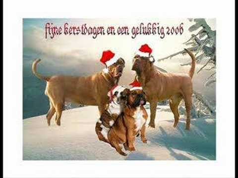 chrismas dogs & cats song - YouTube