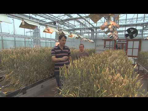20 tonnes hectare de blé tendre en 2020, une utopie ?