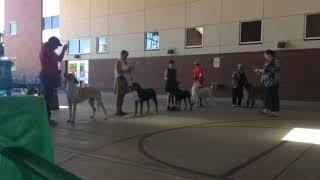 Alabaivalley Central Asian Shepherd dogs USA