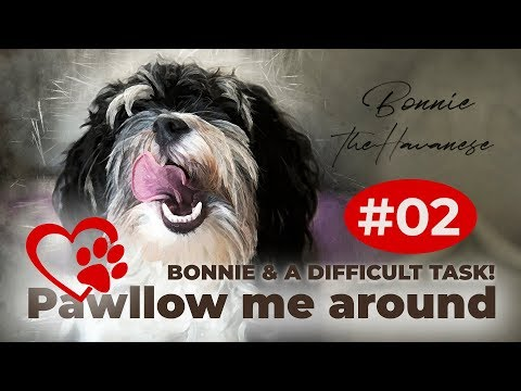 Pawllow me around with Bonnie. Ein weiterer Test der Gopro Hero 5 black