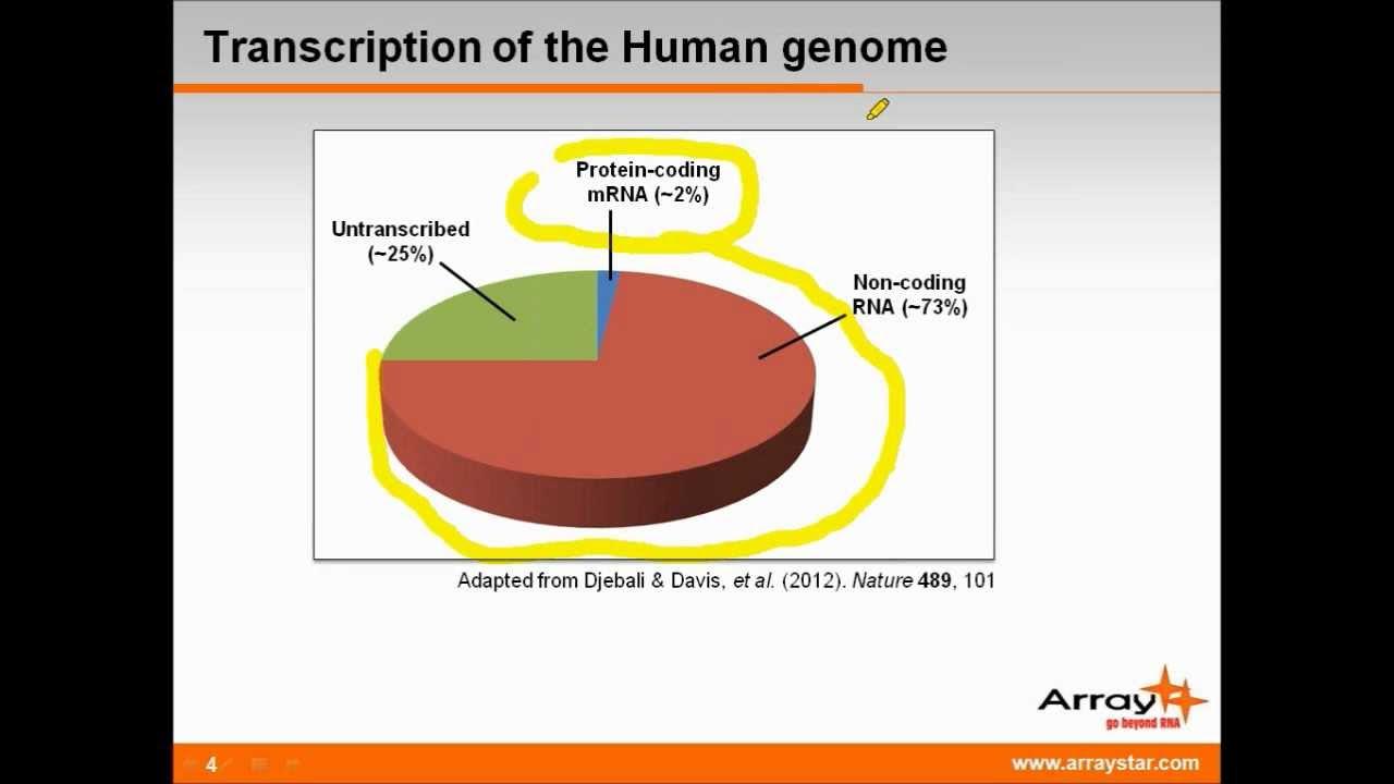 Long non-coding RNAs in Development & Disease Progression ...