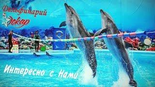 Шоу дельфинов и морских котиков целиком. Дельфинарий Оскар г. Трускавец.