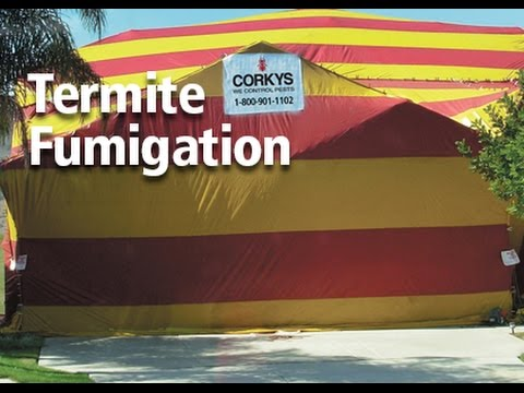 & Termite Fumigation - YouTube