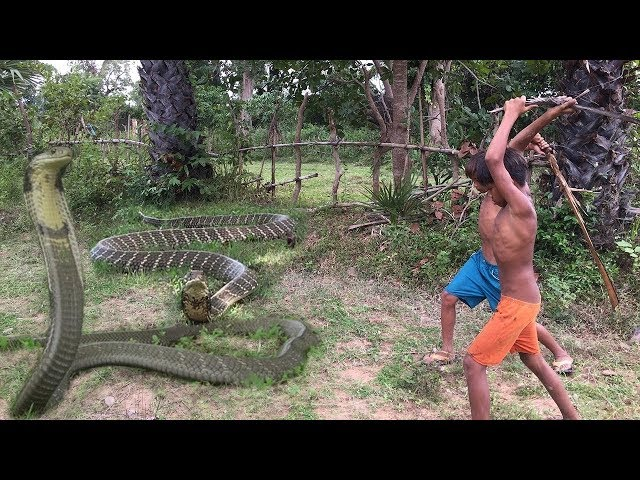 Wow! Children Catch Water Snake Using Bamboo Net Trap - How to Catch Water Snake