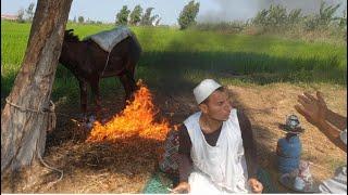 الحاج مبروك يشعل النار في الحمار شئ صدمة