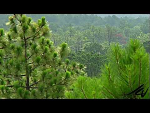 Louisiana Travel and Tourism - YouTube HD