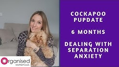 Cockapoo Puppy 6 Month Update | How I'm Dealing with Separation Anxiety | Boredom Busting Toys