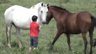 Como pegar o cavalo no pasto sem usar ração com Vitor Peron
