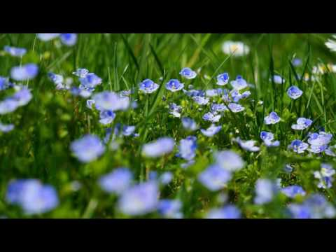 Wind and Birdsong -  Nature Sounds - Grassland - Relaxing, Meditation.