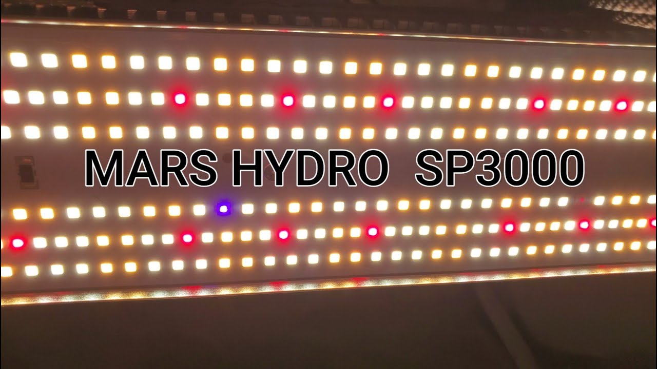 Mars Hydro SP3000 unboxing/review/strain reveal