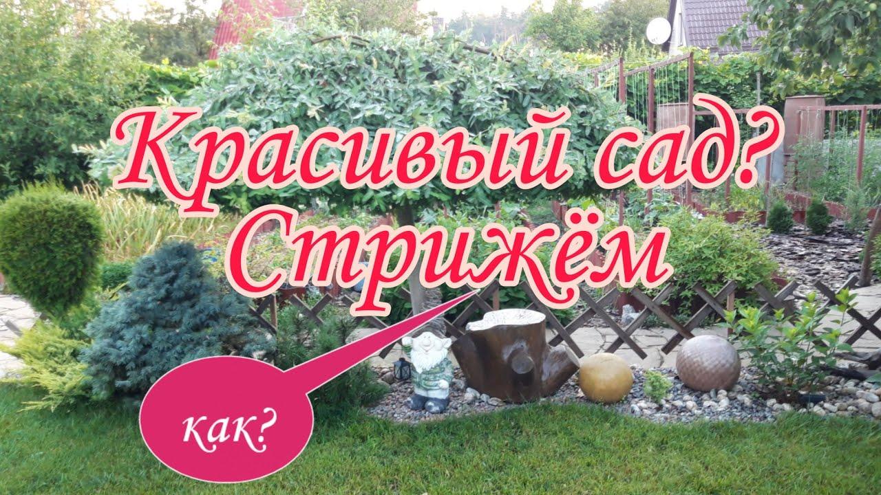 Красивый сад?Стрижка.Создаем формы.Красивые.Дача.Своими руками.Ландшафтный дизайн.Сад СветаСветланы.