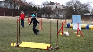 Bobby - Wrocław 01.03.15r. - Agility Westie