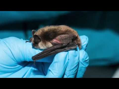 Supernatural Riverside - Bat Conservation