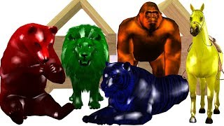 Learn Colurs Wild Animals Finger Family Song For Children || Cartoon Ainmals Rhymes Nursery