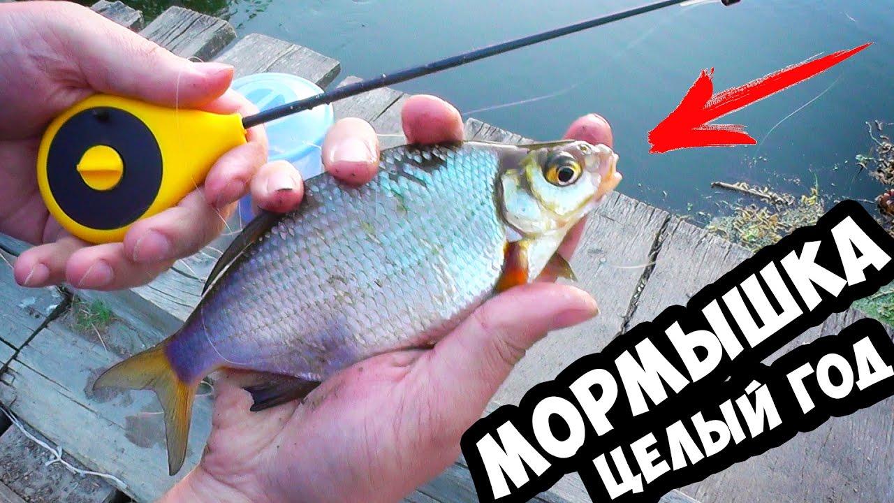 летняя рыбалка на окуня на поплавок в карелии и мормышку видео