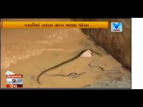 Gujarat Monsoon: Snakes erupts out at Sabarmati River Front | Vtv News
