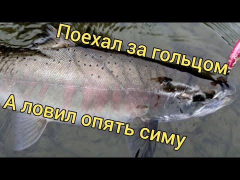 Рыбалка с одной ямы. Ловля симы. Сахалинская рыбалка U0026 Sakhalin Fishing