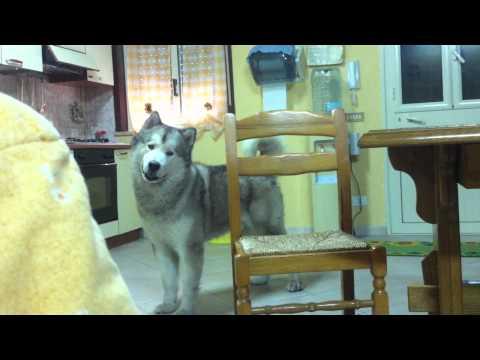 Cane che piange davvero