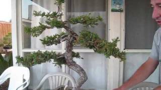 Juniper Deadwood Carving