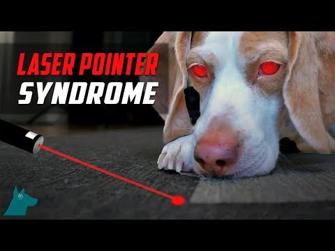 Laser Pointer Syndrome In Dogs (DON'T USE THEM)