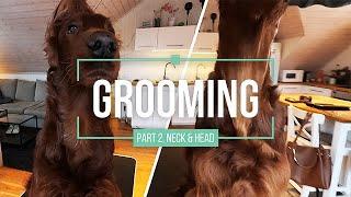 Grooming Part 2  Irish Red Setter  Neck & Head