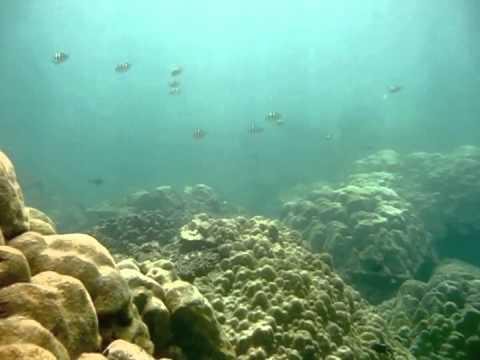 JOY DiVE PHUKET THAILAND