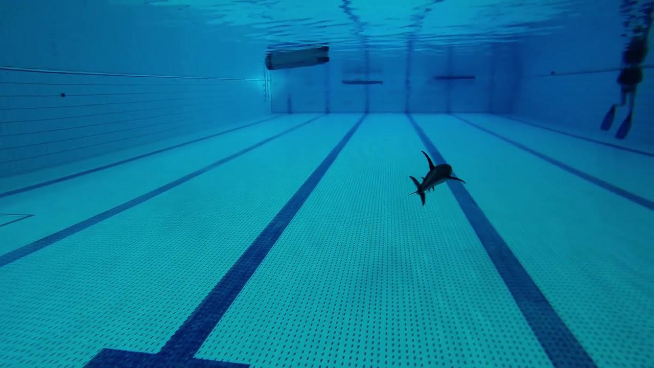 Gopro hero3 black edition requin en piscine youtube - Piscine de forges les eaux ...