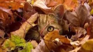 осень осень раз два три ты нам краски подари