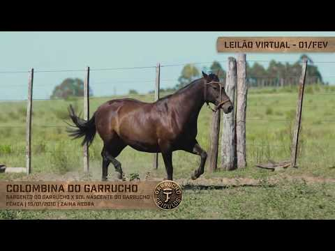 Lote 07 - Colombina do Garrucho