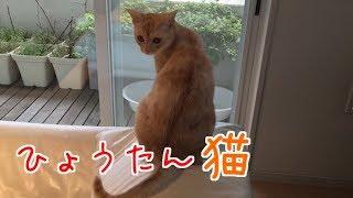 猫の後ろ姿がヒョウタンみたい