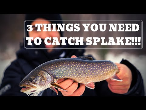 How To Catch SPLAKE!!!! MUST NEEDS!!!!