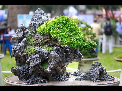 Rock Bonsai Tree