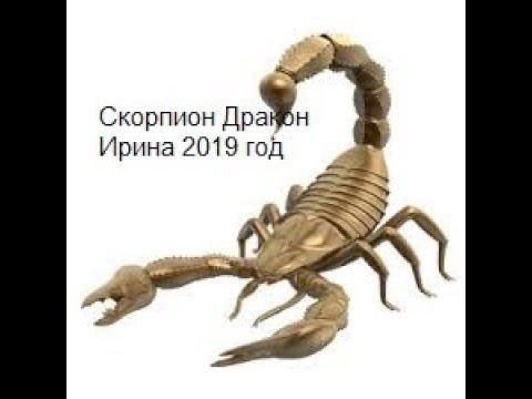Скорпион Дракон Ирина на 2019 год от J Dzay