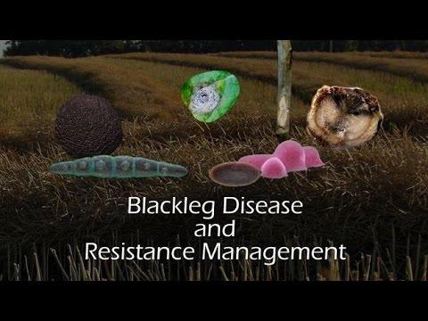 How Cover Crops Boost Soil Health | Dryland No-Tiller