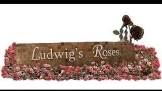 Fortitude South Africa Ludwigs Roses