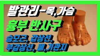 [발관리,발반사요법] 흉부 반사구_ 승모근,갑상선,부갑…