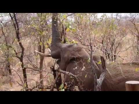 Tarangire Treetops - Tanzania - Elewana Collection