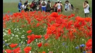 2007 Anello di Pian Perduto (fioritura)