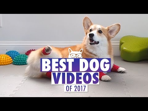 Best Dog Videos of The Year 2017 | Pets of 2017