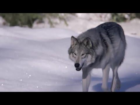 Amazing animal super senses