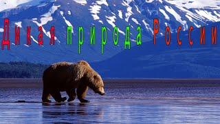 Дикая природа России  Wild nature of Russia