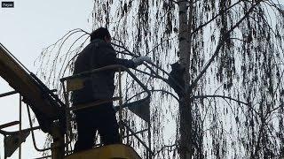 Почему не стоит СРАЗУ снимать котов с деревьев