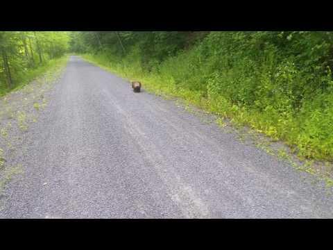 Porcupine, Pine Creek Valley, Pennsylvania,U.S.
