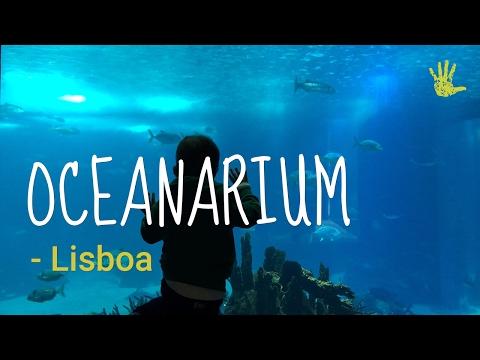 Oceanarium in Lisbon, what to expect?