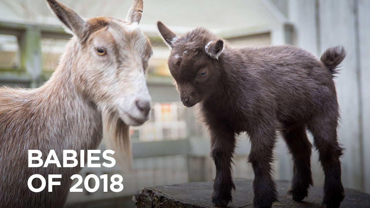 Oregon Zoo's Babiest Moments of 2018