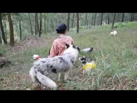 Thả đàn chó cảnh về núi sẽ phản ứng như thế nào?