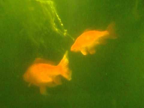 Altitude, Freshwater, Dives