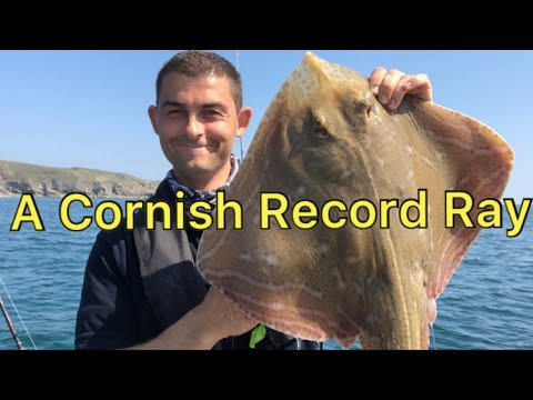 Sea Fishing Cornwall - A Cornish Record Small Eyed Ray Caught And Released!!!