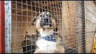 """Как это - спасти 1000 собак //фонд """"Лохматая Душа"""""""